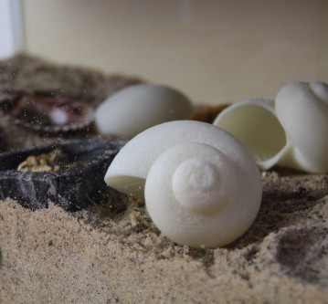 3D Printed shells for hermit crabs
