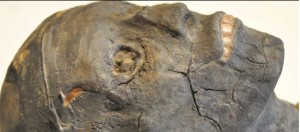 Close up of replica skull