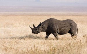 rhino-hd-wallpaper-18-background