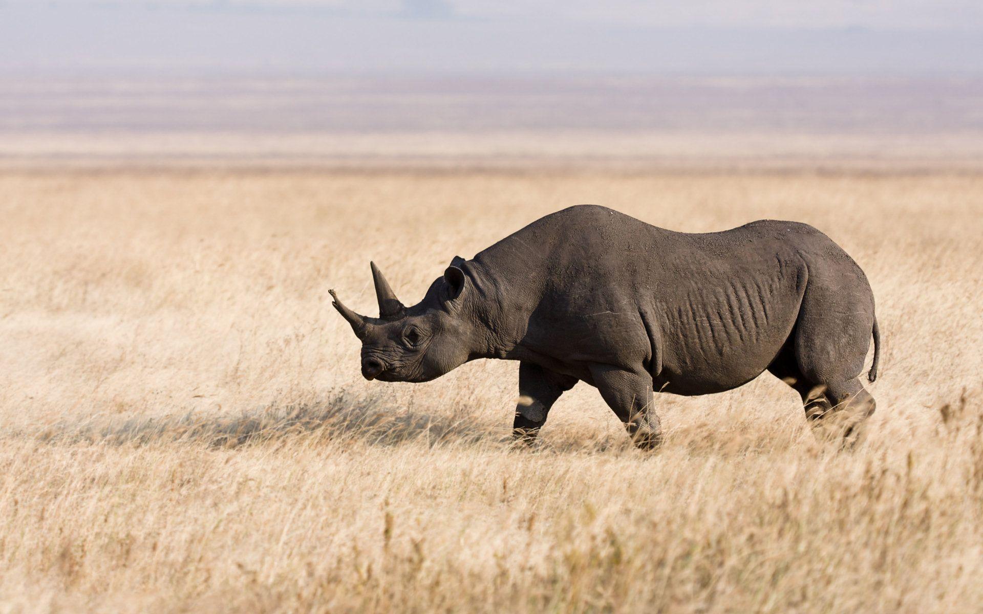 Could Bioprinting Save the Rhino? | 3D Printing News